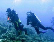 Lặn biển trồng san hô