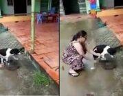 Người phụ nữ Phú Quốc chặt sống chân chó: Vì yêu